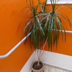 pflanze im treppenhaus im max hostel bonn