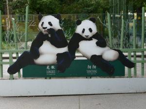 pandabären im tierpark schönbrunn wien