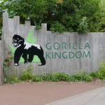 gorillaschild im london zoo