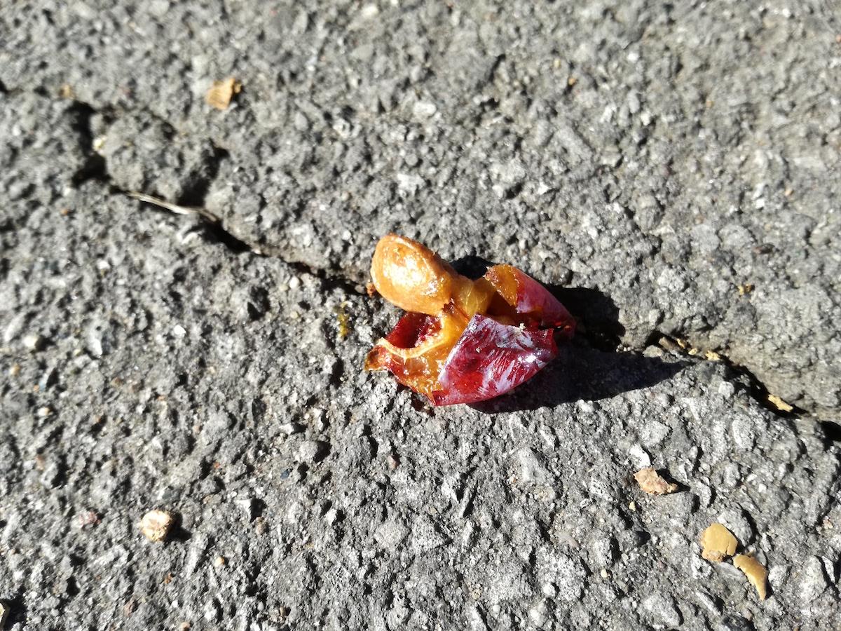 frucht im asphalt in hannover